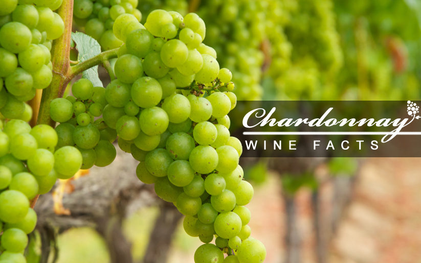 chardonnay wine facts and statistics