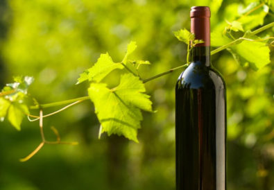 Wine-organic