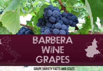 barbera-wine-grapes