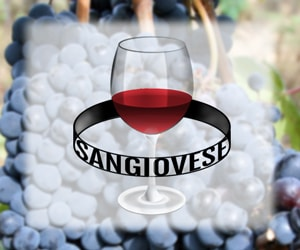 sangiovese wines