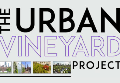 The Urban Vineyard Project