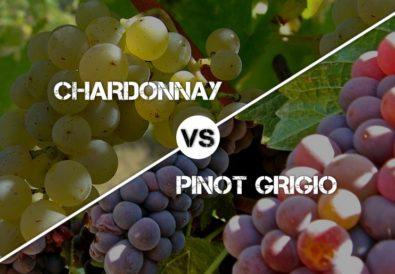 Chardonnay vs Pinot Grigio Wines
