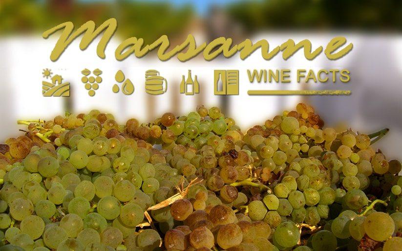 Marsanne Wine Facts