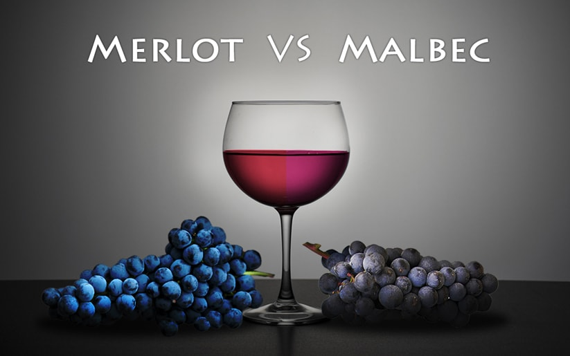 Merlot Vs Malbec Wines