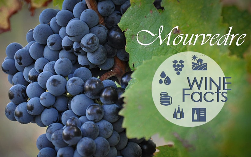Mourvedre Wine Facts