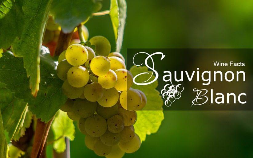 Sauvignon Blanc Wine Facts